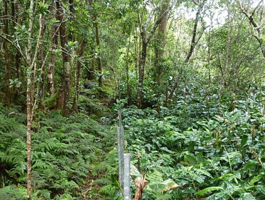 Waikamoi, Maui_PIWaterScienceCenter