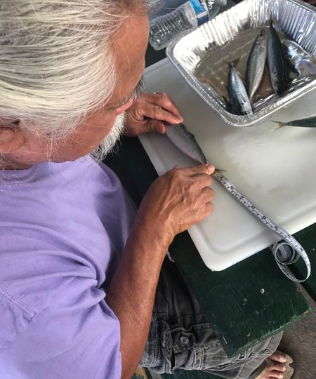 Man lays a small fish along a ruler, with more fish in a tray nearby.