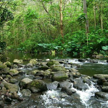 adapt_forest-management
