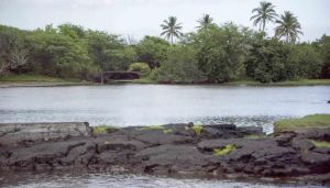 Fishpond with lava rock in forefront and coastal forest in background.