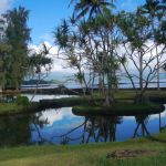 Honokea loko fishpond with still waters reflecting the sky surrounded by coconut trees and containing an island with hala trees on top.