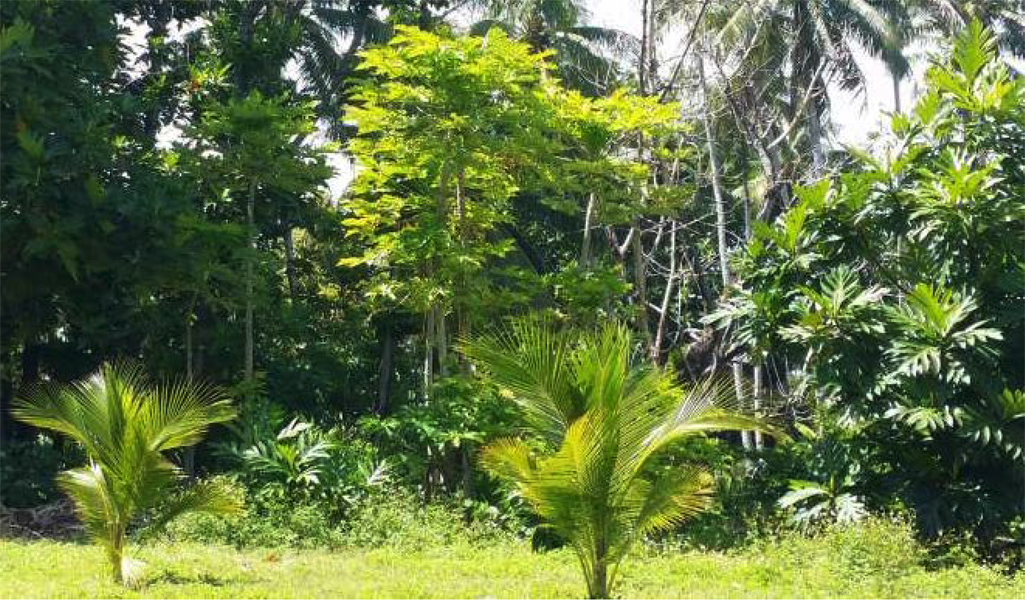A variety of lush trees form an intergrown area.