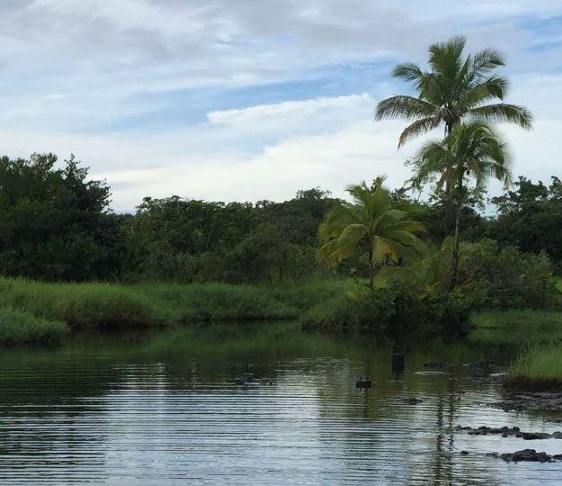 Lush vegetation surrounds a pond