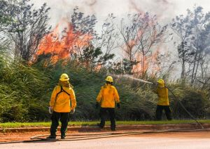 Three yellow-clad workers spray water on blazing road-side brush