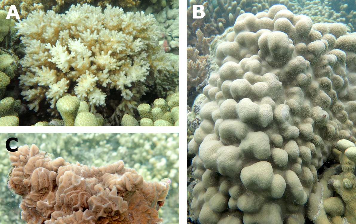 Close-up images of three different coral types