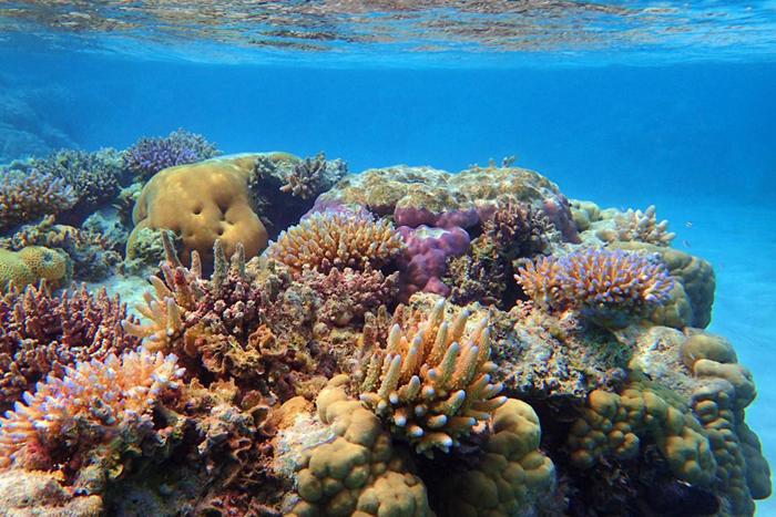 Underwater image of colorful varieties of coral