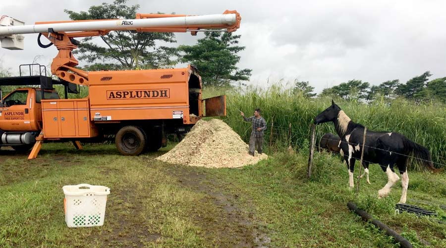 A woodchipper has produced a pile of shredded wood, with a curious horse looking on.
