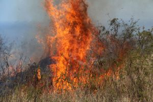 A patch of fire amidst dry grasses