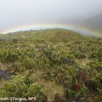 A scrubby landscape in the foreground is backed by mist and a low, ground-hugging rainbow.