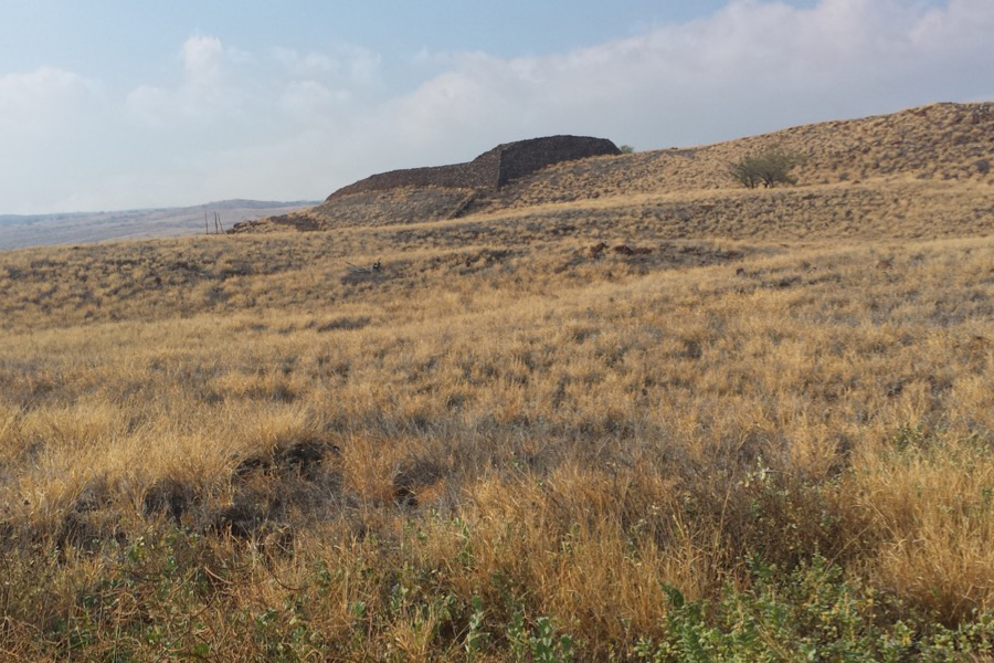 A dry grassy landscape