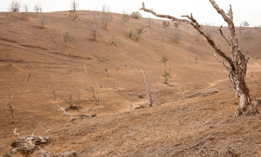 A shallow valley is covered with dead brown grass and a scattering of dead and dying tree trunks.