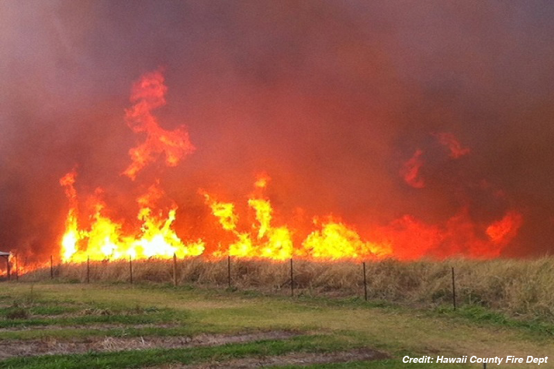 Flames glow yellow and red behind a road-lining hedge.