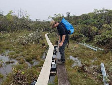 A hiker steps off a boradwalk snaking through a swampy area