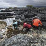 Students examine rocks and marine life at the oceanʻs edge.