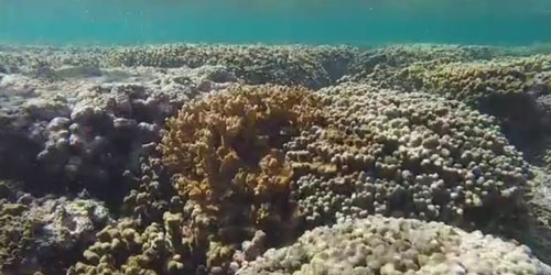 Underwater image of a coral bed with live and dead sections.