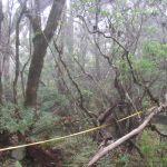 A measuring tape runs off through trees.