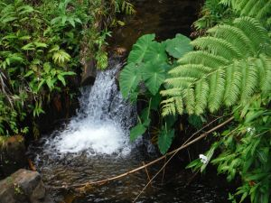 Stream water pours down a small fall between fern-covered banks