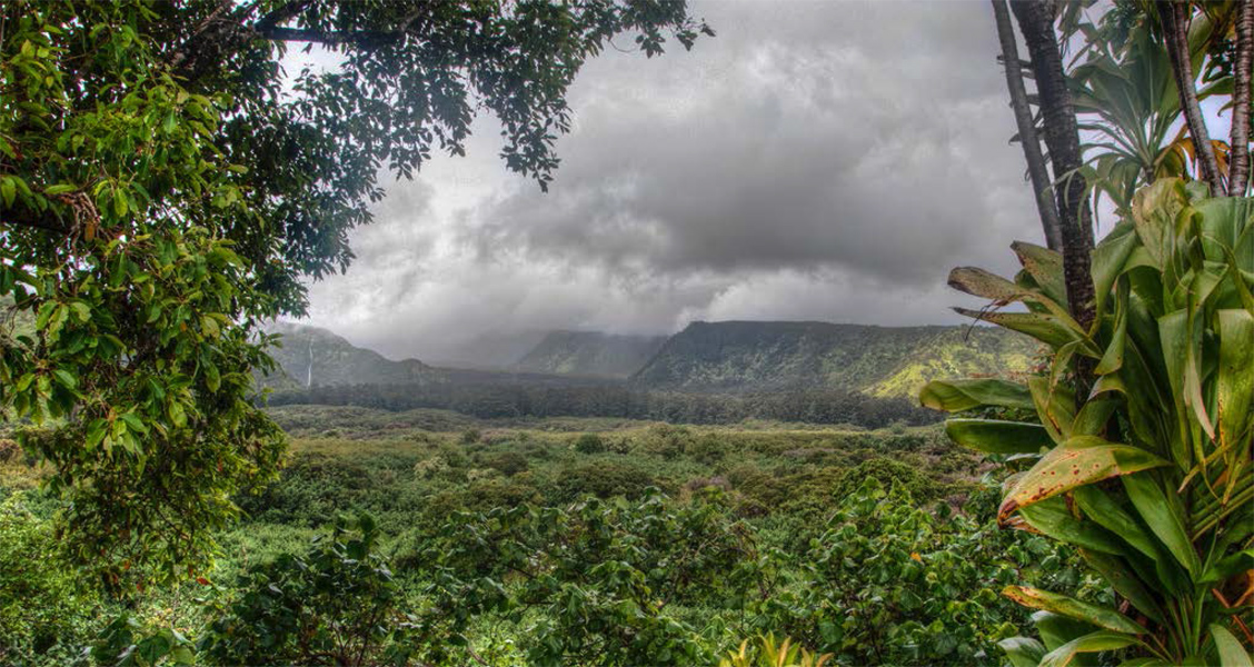 An overlook of a lush vegetation shows rainclouds in the background.
