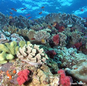 Scenic underwater scene with a coral landscape