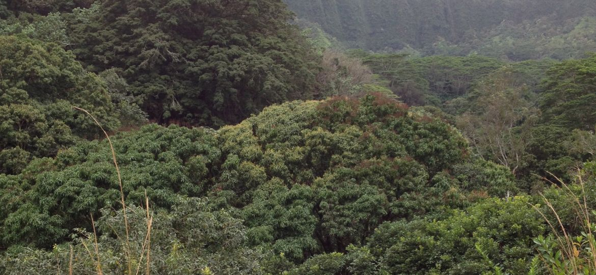View of forested hillsides