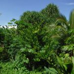 Image shows dense, lush tropical trees and bushes