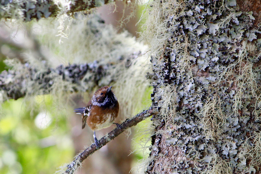 A small, brown bird sits on the branch of a tree