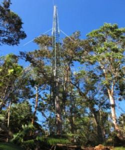Tall trees of various species cluster around a watchtower framework.