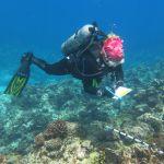 A diver examines a reef