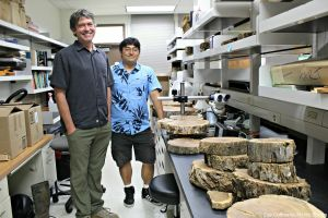 Pat Hart and Shea Uehana in the lab surrounded by slices of tree trunks.