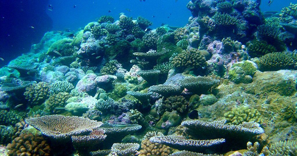 Underwater scene of colorful corals and fish