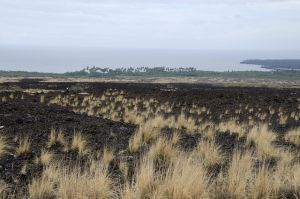 Dry grasses scatter across a brown lava field